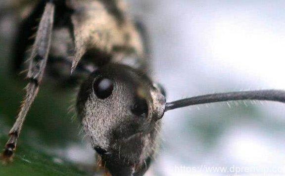 蚂蚁感知不到人类文明,那人类是不是也感知不到地球更高的文明?