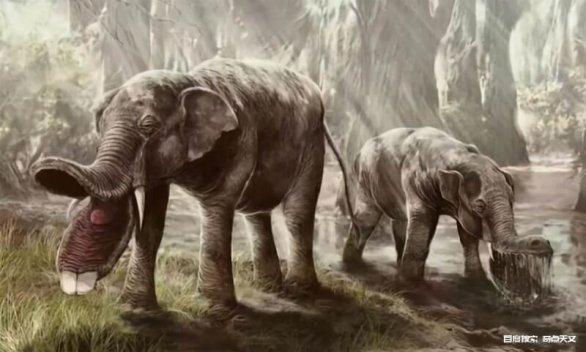 如果大象早已灭绝,科学家能通过化石推测出大象的长鼻子吗?